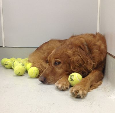 Toby and tennis balls